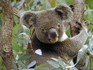 Saiba tudo sobre a instalacao do Ubuntu Karmic Koala