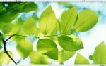 LeavesSky