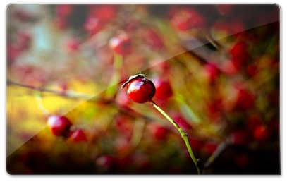 Berries_by_Orb9220l