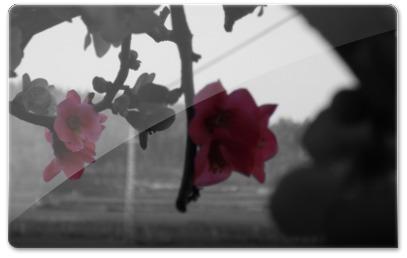 Flores evidenciadas na fotografia