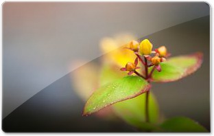 Morning_Dew_by_Lars_ClausenM