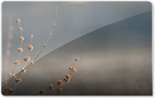 Winter_Morning_by_Shannon_LucasM