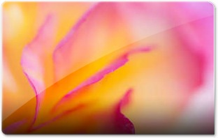 Begonia by fatpoint21M